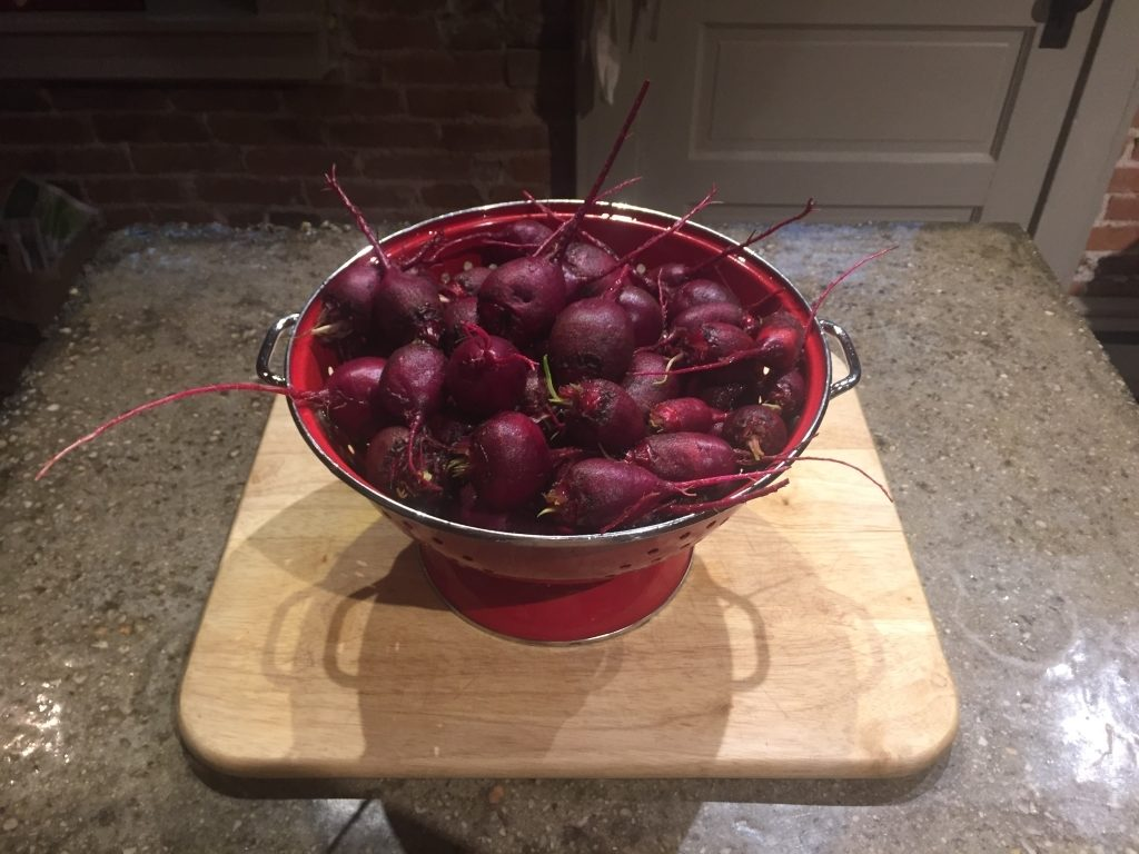 Beets Washed For Slicing